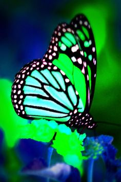 Google Image Result for http://actualdownload.com/pictures/screenshot/butterfly-screen-saver-3504.gif