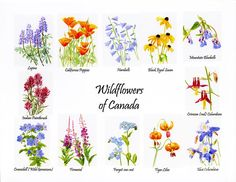 Wildflowers Of Canada Poster Painting  by Sharon Freeman
