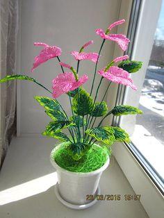 одноклассники Pink Bead Anthurium