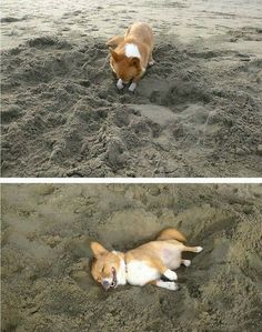 Hey, you crazy????? A dog dig a hole to bury himself.....He pretend to very enjoy.........Oh My! More fun in https://www.facebook.com/MyfoodiePet
