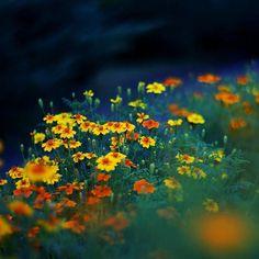 30 de poze cu flori minunate - Poza 17