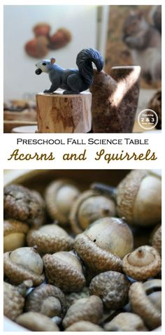 Fall Science for Preschool with Squirrels and Acorns - Teaching 2 and 3 Year Olds