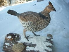 Ruffed Grouse carved out of one piece of tupelo wood.. Wayne Yarrow, Temagami, Ontario, Canada