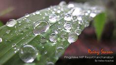 พักผ่อนกับธรรมชาติบริสุทธิ์ใกล้ๆตัวคุณที่นี่ ปิงปาลีย์ รีสอร์ท กาญจนบุรี