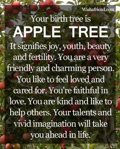 Do you know that your date of birth is associated with a birth tree? Find out your birth tree and what it reveals about your personality. Know the birth tree for each month here.