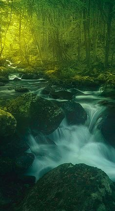 Black woods in the Apennine Mountains of northern Italy • photo: Enrico Fossati on 500px