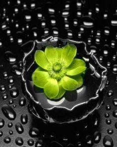 green flower,,,color splash,,,