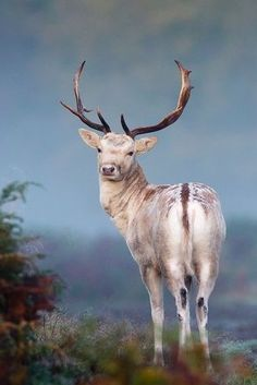 That's a extremely pretty fallow.