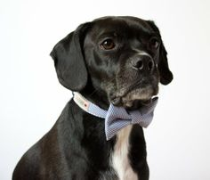 Dogs -- They're Just Like Us. Sure, they have a lot on their minds — walks, dinner, treats — but pup or person, certain style is universal. What can these dapper dogs teach you? Read on.