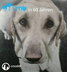 old gismo dog - age your dog #olddog #funnydog #cnuddl  https://cnuddl.com/