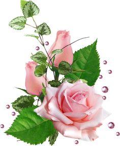 Folk Art Flowers, Botanical Flowers, Flower Art, Real Flowers, Pink Flowers, Rose Flower Wallpaper, Decoupage Glass, Flower Images, Beautiful Roses