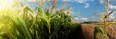 Organics Booming under Monsanto Rejection