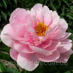 Beautiful Flowers, Seeds, Artsy, Women's Fashion, Plants, Handmade, Inspiration, Roses, Cute