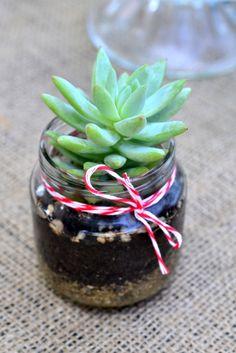 Our Portfolio | The Republic of Succulents, http://www.republicofsucculents.com
