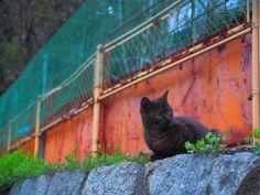 #cats #ねこ #onomichi #hiroshima #japan #instagood #instalike  #photo_shorttrip  #photooftheday #portrait #photo  #instajapan #instadaily  #japantravel #retrip #japantrip  #natgeo #amazing #旅 #写真  #solo #yolo #fun #look  #awesome #cool #happy  #hello