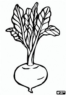 Beetroot 3 coloring page from Beets category. Select from 31983 printable crafts of cartoons, nature, animals, Bible and many more. Vegetable Coloring Pages, Fruit Coloring Pages, Animal Coloring Pages, Colouring Pages, Coloring Books, Art Drawings For Kids, Drawing For Kids, Easy Drawings, Printable Crafts