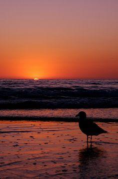Newport Beach, California via flickr