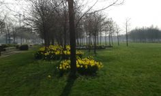 Spring Daffs on Greenwich Peninsula. Greenwich Peninsula, Country Roads, Spring, Plants, Plant, Planting, Planets