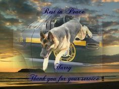 Harry was the last surviving State Police Search Dog that worked the World Trade Center attack..R I P Harry..Romp in Paradise..Thank you for your service.