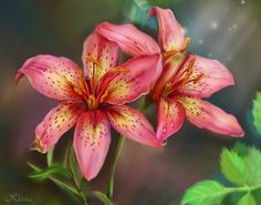 Lily - Chinese meaning = long life of happiness