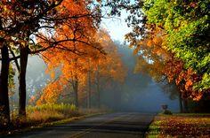 Estaciones del año Otoño Carreteras árboles Naturaleza