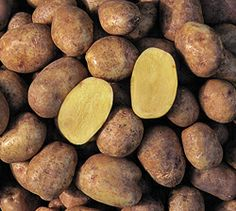 Potatoes Yukon Gold- Early-mid season- The tubers are oval, slightly flattened, finely flaked golden skin, shallow pink eyes, with creamy yellow flesh superior flavor. Uses for baking, French fries, boiled, and an excellent mashed potato. These are excellent for keeping.