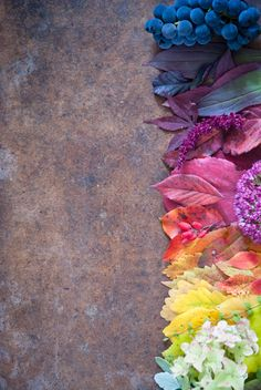 Photograph Autumn leaves and berries by letterberry on 500px