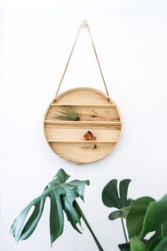 Shelf/decoration for pegboard sunwall or living room wall? Maybe spraypaint the background copper? Use a cheese box lid or bamboo steamer--no need to put shelves inside unless we want. Can glue/cradle airplants in the bottom curve.