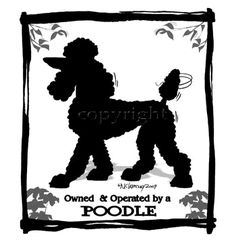 Poodle Owned and Operated