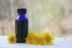 Do you know infusing fresh herbs in oil can lead to rancidity? Learn how to properly infuse fresh herbs with this fresh dandelion blossom oil tutorial! Herbal Tinctures, Herbal Oil, Herbalism, Natural Home Remedies, Herbal Remedies, Natural Healing, Outlander Recipes, Dandelion Recipes, What Are Essential Oils