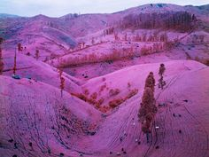 wowwww purple hills