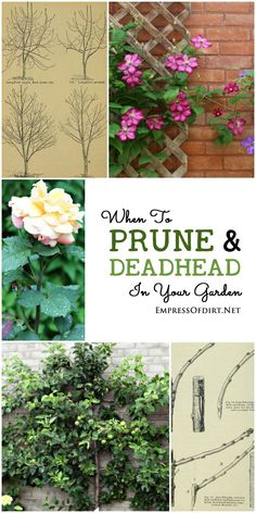 Pruning is probably one of the most confusing topics for new gardeners because there is no single method or timing that suits all situations. But, there are some basic underlying principles that, once you know them, can make it much easier to know whether to snip and clip or leave things ..