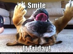 friday pictures | Friday Fun: Five Hilarious and Adorable Dog Videos | Walking The Blog