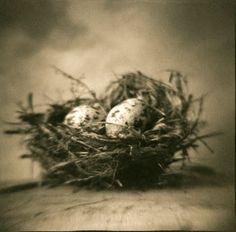 Sepia birds nest #photography
