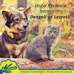 Avucumda.com'da PetShop mağazanızı siz hala açmadınız mı? 5 adım da mağazanızı açın #Avucumda #PetShop #mağaza #hayvan #kedi #köpek