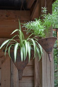 Funnel turned planter! How cute!