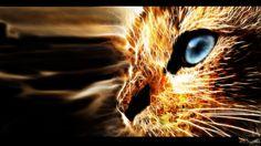 3D Fractal Art Cats   Gallery/Galeria   Biguth   Digital Art