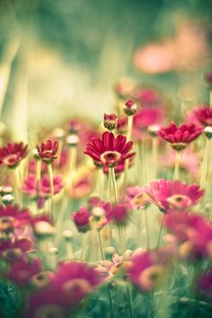 shallow depth of field  Balance: the photo is pretty balanced because there is repetition throughout the whole photo Color: the bright pink flowers contrast against the green grass. They are contrasting colors  Movement: no movement