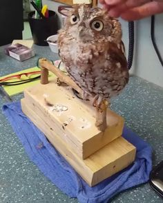 I Love My Owl - tiere - Animals Pictures Funny Owls, Cute Funny Animals, Cute Baby Animals, Funny Cute, Animals And Pets, Cute Cats, Baby Owls, Nature Animals, Wildlife Nature