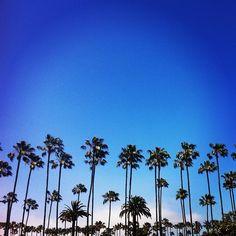 Palm Tree Heaven- La Jolla, California