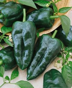 Excellent for making chili powder Ancho Grande Hot Pepper Seeds /& BIG!!!!!!