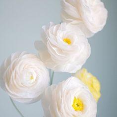 There's something so clean and fresh about white #ranunculus. My crush at the moment #ranunculuslove . . #diy #diywedding #customflowercouture #paperart #paperartist #paperflowers #papercrafts #crepepaperflowers #crepepaperrevival #torontoart #toronto #canadianartist #weddings #weddingidea #weddingbouquet #paperbouquet #weddingflowers #weddingflorist #floral #floralart #floristry #florist #floraldesign #floraltalk #flower #flowertalk #instaflower #craftedtobloom.