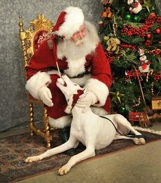 Harpo loves Santa!