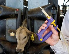 Is Antibiotic Resistance due to Livestock drug use?
