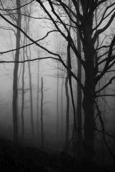 """the woods mutter and creak, """"it's a bad, bad business"""" as they watch the forest floor:"""