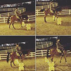 Picking their way over #horse #horses #horseoftheday #horsesofinstagram #instahorse #instagramhorses #instapet #petsofinstagram #petoftheday #instagrampets #equestrian #equestrianlife #horsebackriding #horseriding #horselessons #horsetraining #arab #baby