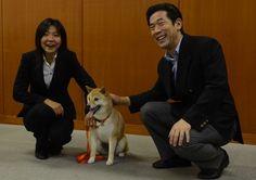 警察犬:初の柴犬「二葉」 任期終え災害救助犬に
