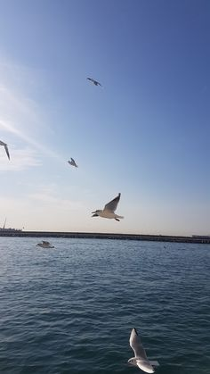 istanbul ve marti Istanbul, Wallpaper, Travel, Animals, Natural Beauty, Voyage, Animales, Animaux, Wallpapers