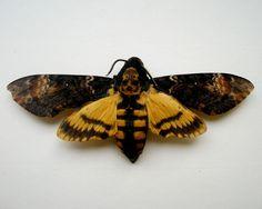 Acherontia Atropos, Death's Head Hawk Moth