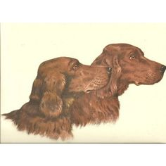 Check out this item at One Kings Lane! Irish Setters